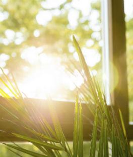 La lumière naturelle vous apporte une énergie positive