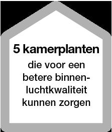 5 kamerplanten die voor een betere binnenluchtkwaliteit kunnen zorgen